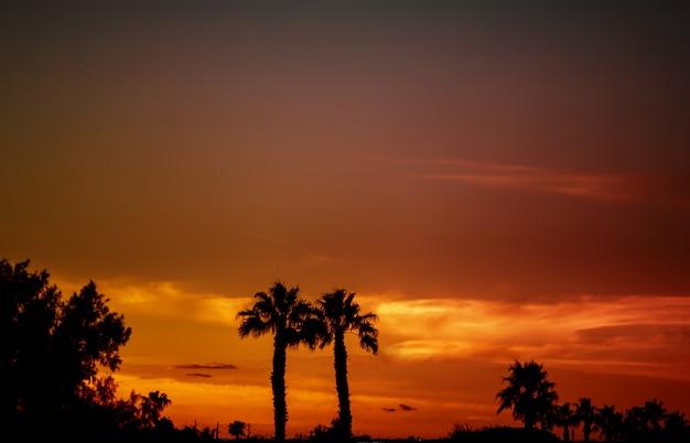 Silhuetas de palmeiras contra um pôr do sol tropical.