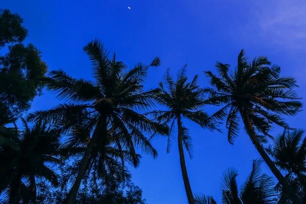 Silhuetas de palmeiras de noite azul