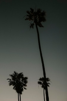 Silhuetas de palmeiras no céu escuro