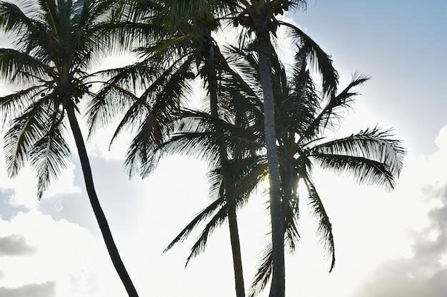 Silhuetas de palmeiras tendo como pano de fundo o pôr do sol