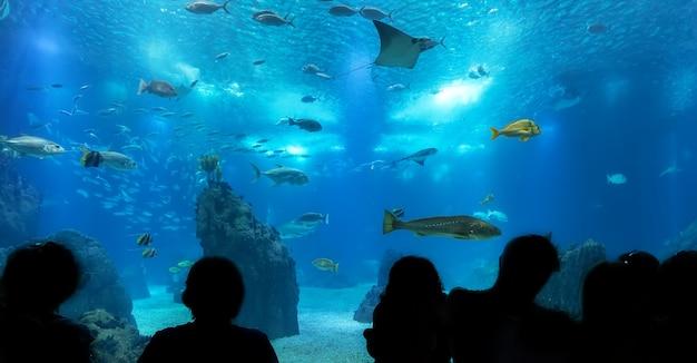 Silhuetas de pessoas contra o aquário azul.