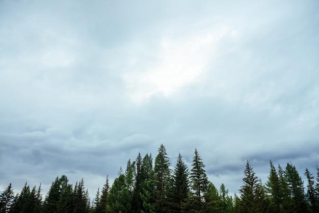 Silhuetas de pinheiros em céu nublado