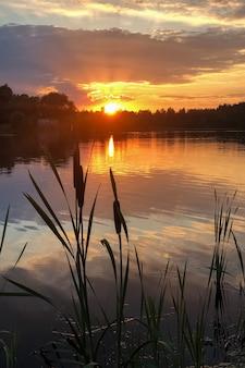 Silhuetas de taboa crescendo no lago ao pôr do sol