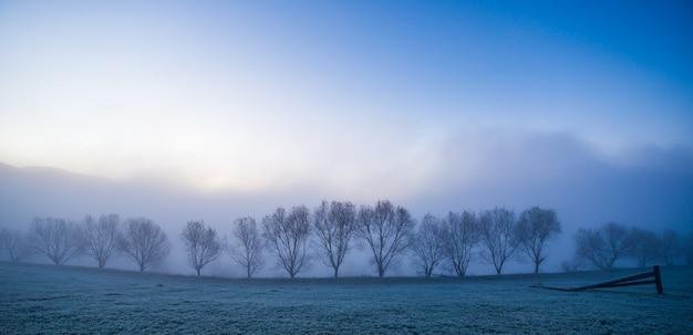 Silhuetas negras de pequenas árvores cobertas por uma névoa azul e fofa nas pitorescas montanhas dos cárpatos na bela ucrânia