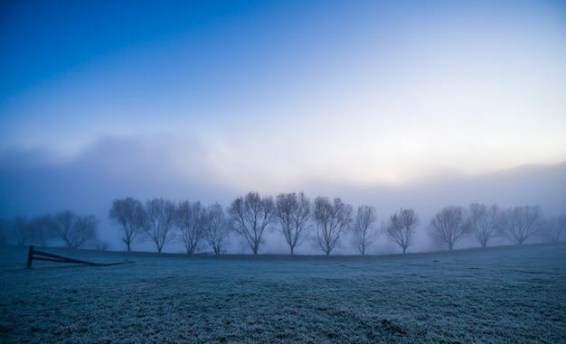 Silhuetas negras de pequenas árvores cobertas por uma névoa azul e fofa nas pitorescas montanhas dos cárpatos