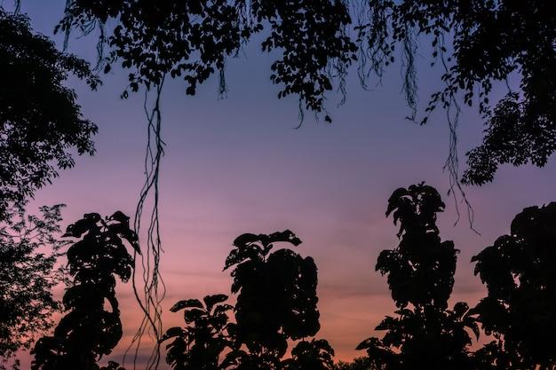Silhuetas, pôr do sol entre as árvores. luz e beleza do céu ao pôr do sol.