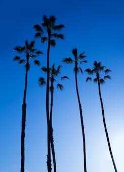Silohuette de palmeiras altas califórnia no céu azul