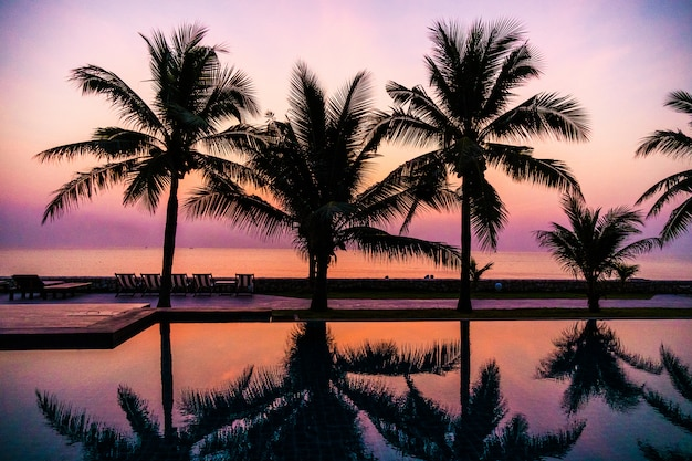 Silueta, coqueiro, ao redor, ao ar livre, piscina