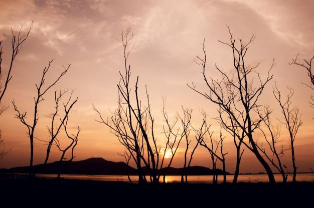 Silueta, de, árvore, com, céu ocaso