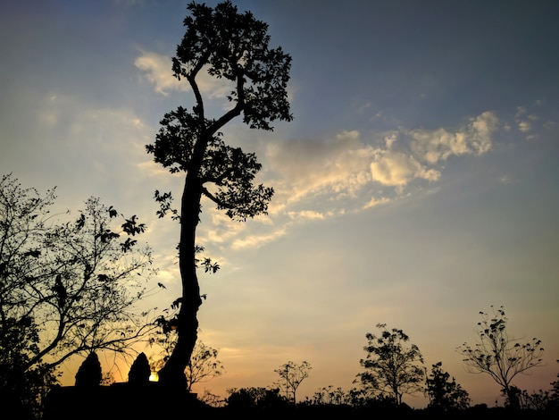 Silueta, de, árvore, em, pôr do sol