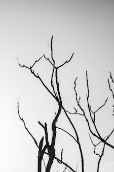 Silueta, de, árvore nua, contra, céu
