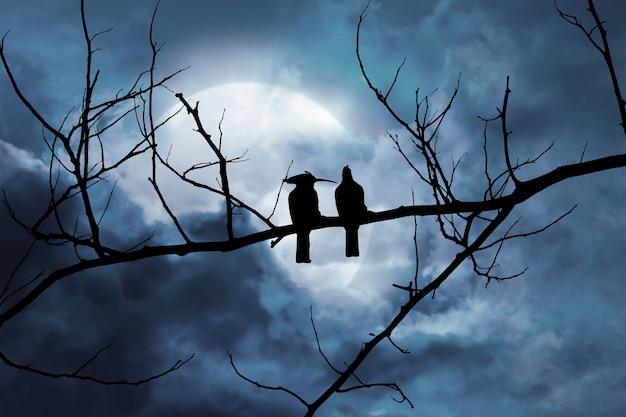 Silueta, de, dois pássaros, uma filial, em, um, noturna, cena, com, um, moonlit, fundo, em, um, nuvem