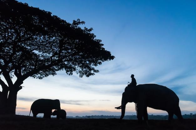 Silueta, de, elefante