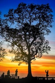 Silueta, de, fotógrafo, fazendo exame retrato, sob, grande, árvore, em, pôr do sol