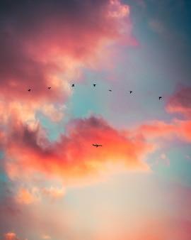 Silueta, de, pássaros voando