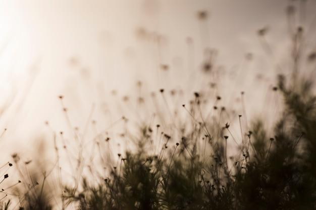 Silueta, de, planta, durante, pôr do sol
