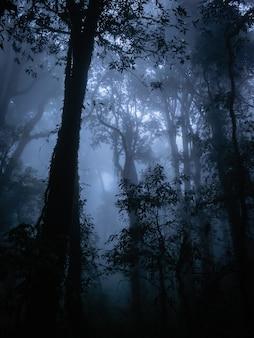 Silueta, de, planta, em, a, assustador, floresta