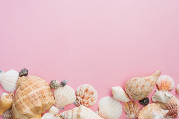Símbolo das conchas do mar de férias de verão na praia em um fundo cor-de-rosa.