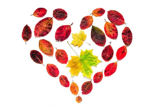 Símbolo do coração outono de bordo amarelo e folhas vermelhas, isoladas no branco