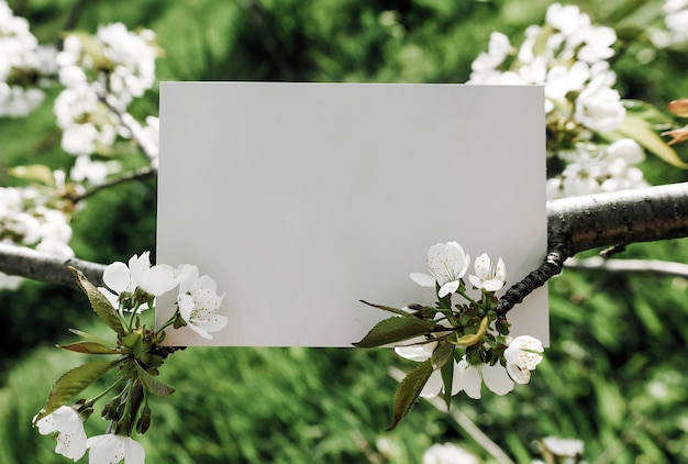 Simulação de carta de cartão postal em branco pendurada na cerejeira em flor, lugar para texto