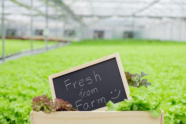 Sinal de fazenda colocado na frente de vegetais orgânicos