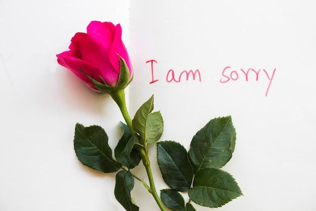 Sinto muito, cartão de mensagem com flor rosa
