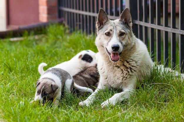 Sira de mãe ao cão com filhotes de cachorro do bebê, um filhote de cachorro bonito, um cão, cão - focalize na parte dianteira.