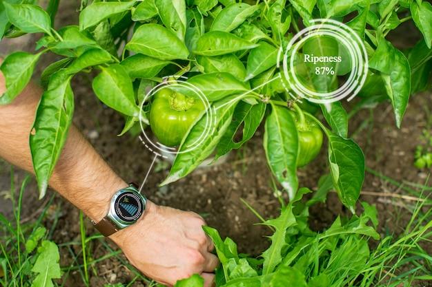 Sistema de agricultura agrícola inteligente de inovação. use inteligência artificial por agrônomo