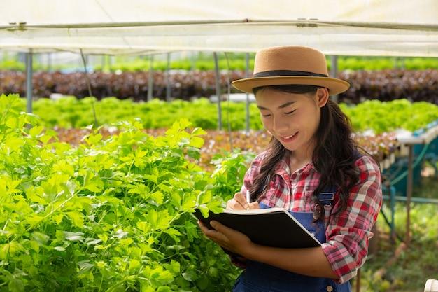 Sistema de hidroponia, plantio de vegetais e ervas sem usar o solo para a saúde