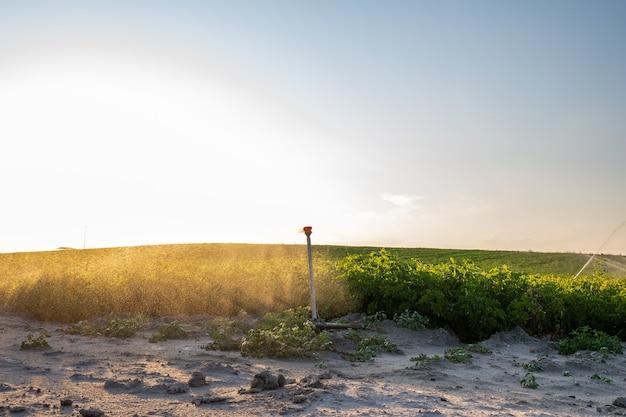 Sistema de irrigação automática para agricultura no campo, pulverização de água ao entardecer, profundidade de campo curta