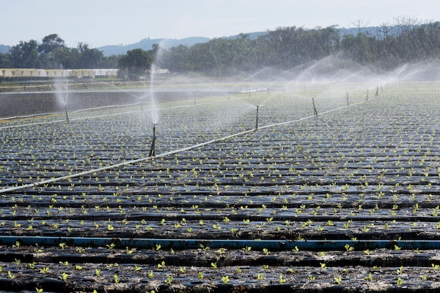 Sistema de irrigação, em contraluz, em plantio de vegetais