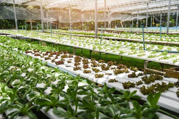 Sistema hidropônico vegetal