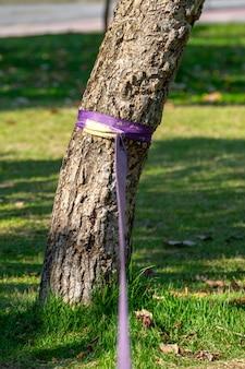 Slackline roxo preso em uma árvore em um parque no rio de janeiro no brasil.