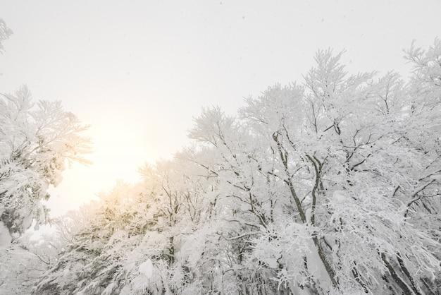 Sledding, árvores, cobertura, abeto, montanha