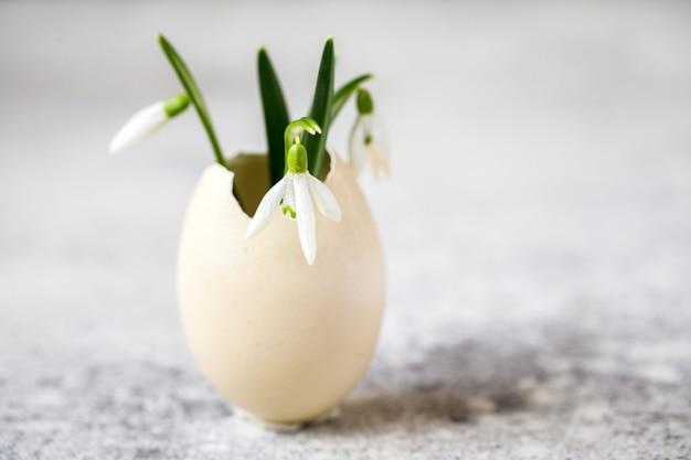Snowdrop em casca de ovo. primeira flor é um símbolo da primavera.