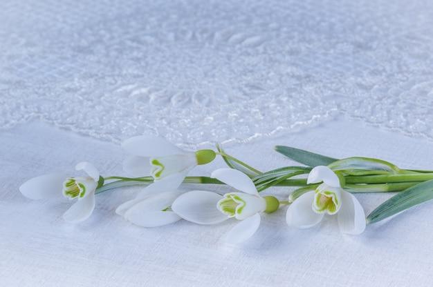 Snowdrops no fundo branco com laço