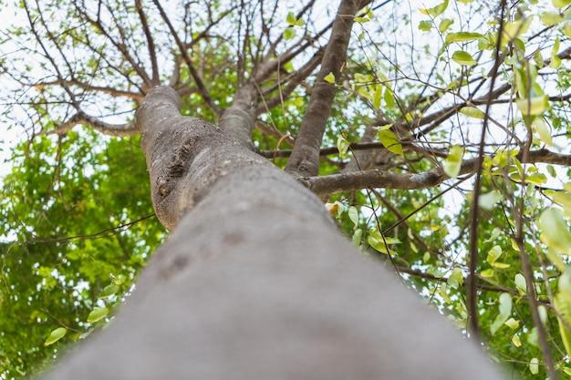 Sob a exibição de árvore - uma foto de baixo arvoramento focalizando no meio da haste da árvore