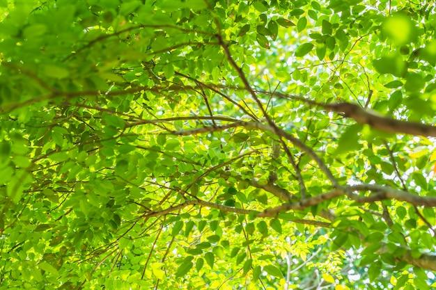 Sob a folha verde grande árvore