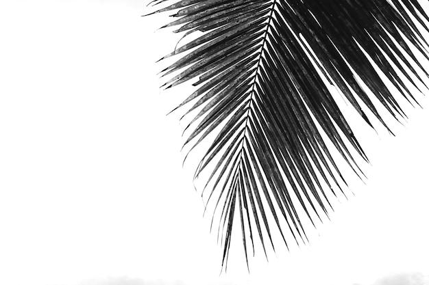 Sob um coqueiro e um céu azul com espaço de cópia
