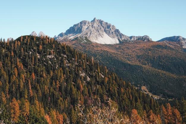 Sobrancelha e árvore verde na montanha