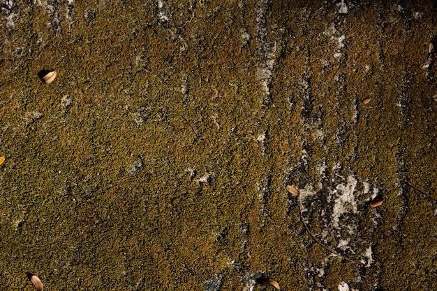 Sobrancelha e textura de musgo seco amarelo e fundo