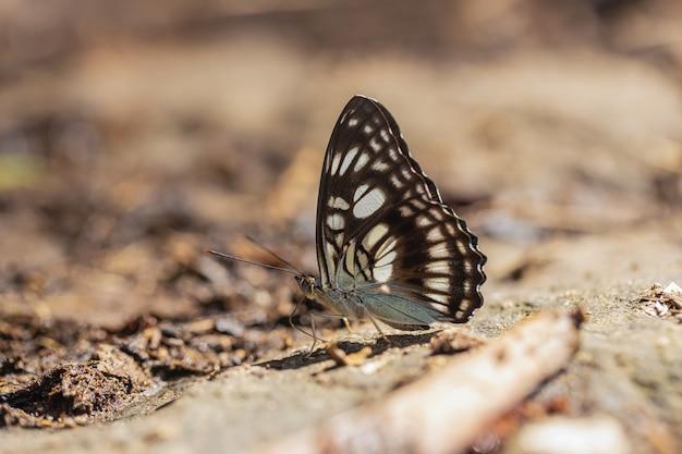 Sobre a borboleta colorida no dia ensolarado