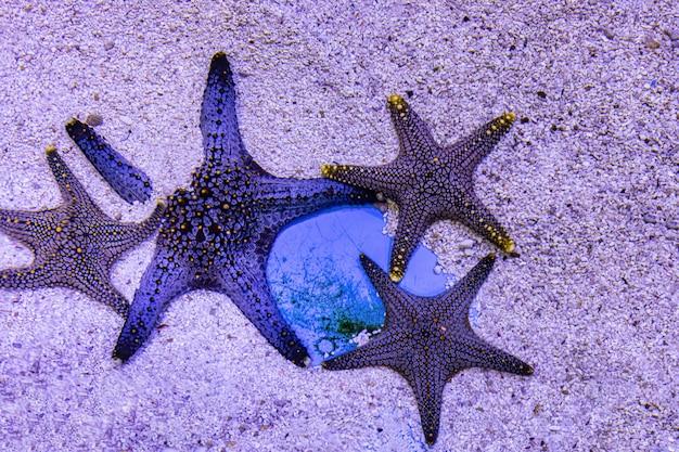 Sobre peixes do mar e peixes de água doce no aquário