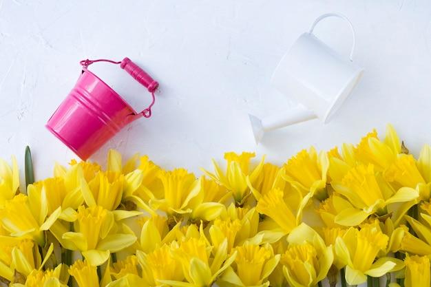 Sobre um fundo branco, um buquê de narcisos amarelos, um regador e um balde