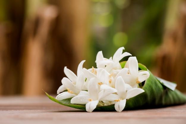 Sobreiro ou flores de hortensis millingtonia no fundo da natureza.