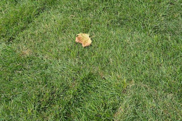 Sod para novo gramado em uma queda, o empilhamento de rolo de grama verde. nova grama de rolamento