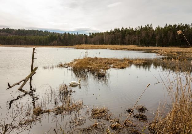 Sol atrás das nuvens sobre o lago, gjennestadvannet, stokke, vestfold na noruega