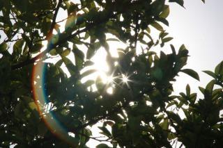 Sol atrás de uma árvore