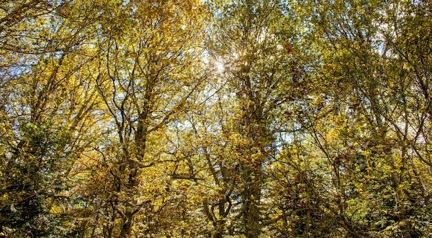 Sol através da folhagem de outono