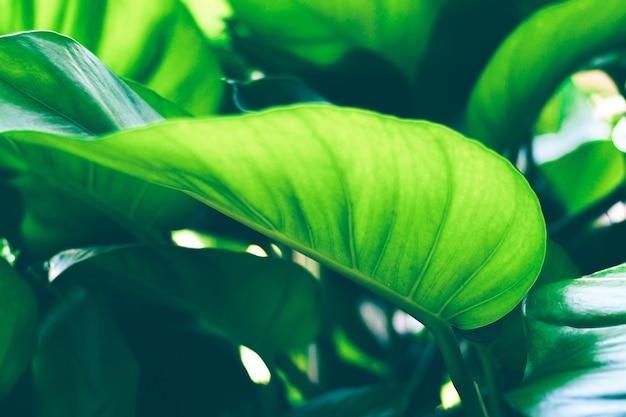 Sol brilhando através de uma folha verde. textura de fundo natural.